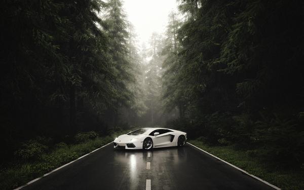 Lamborghini forest illustration